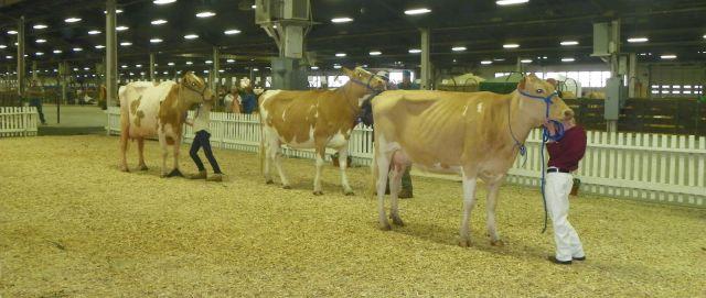 dairy agenda today dairy news